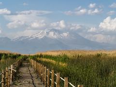 Album photos2015 Voyage dans le Caucase et en Turquie.    Réserve Sultan Sazligi