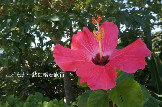 okinawa2015330