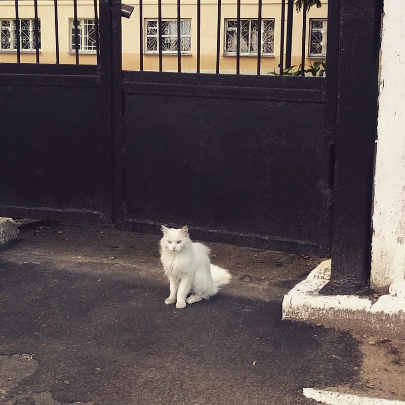 Гомель. Кот, каты, котэ, коты