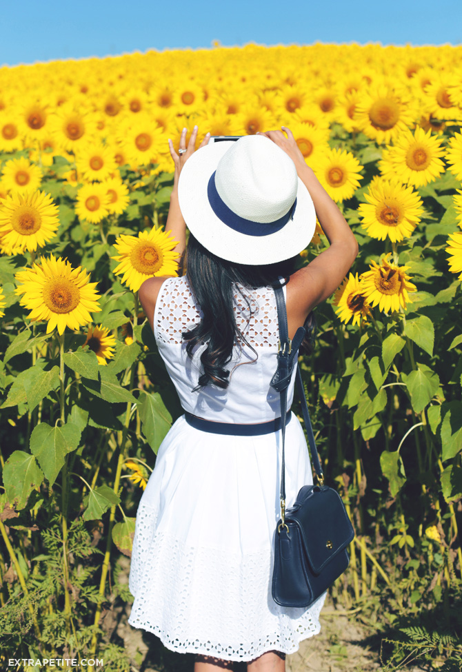 sunflower fields ann taylor dress