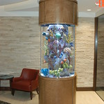 225 gal. SW Fish only Display - Corporate Office - Boston - 2