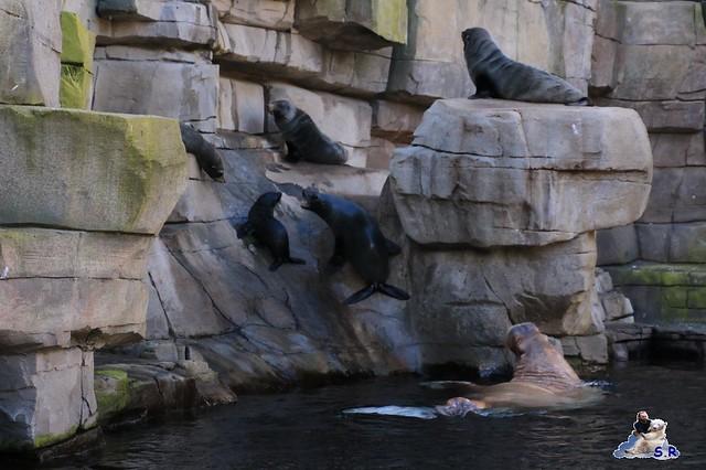 Tierpark Hagenbeck 27.09.2015 071