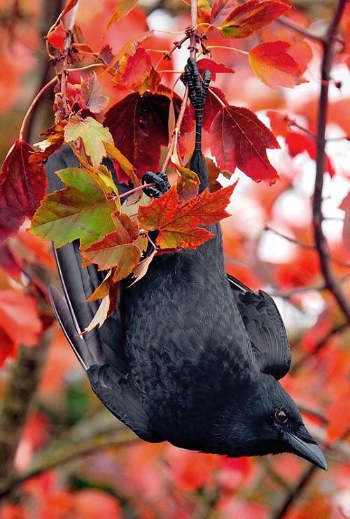 bird autumn (3)