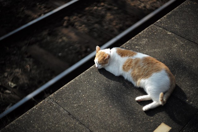 Cat that acts as a station employee.