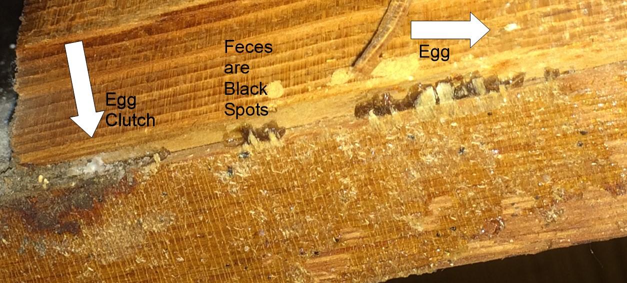 Bed Bug Advice Sheet