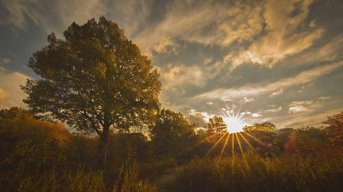 autumn fall newjersey nj fallfoliage flare rahway miltonlakepark