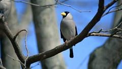 а birds_092