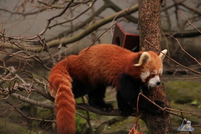 Tierpark Berlin 29.11.2015   145