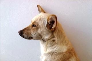 Noicattaro. Il cane Zecca front