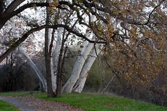 Los Alamitos Creek