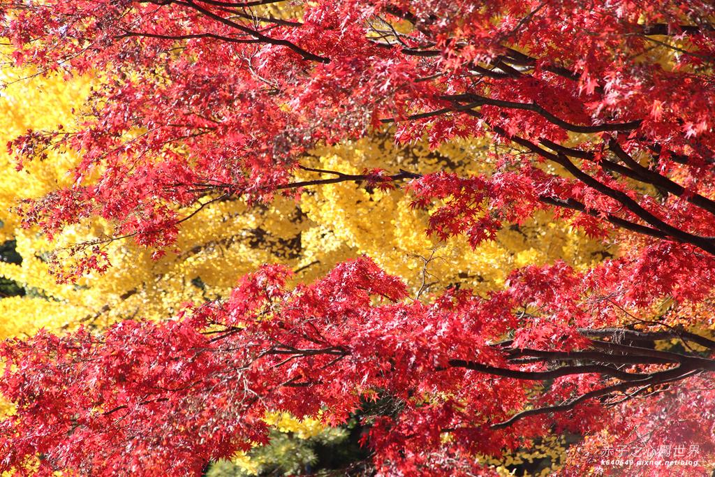 東京賞楓-日比谷公園26