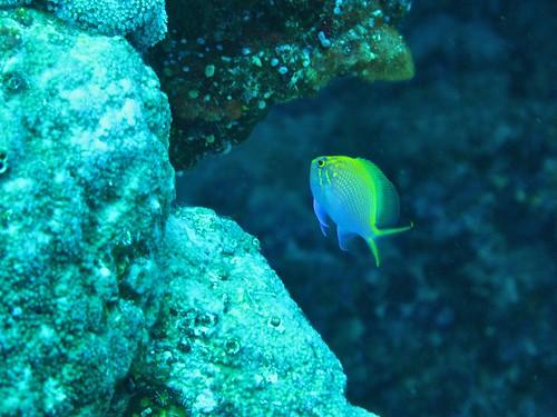 fauna oceanwildlife environments water biodiversity