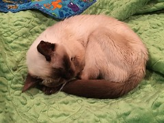 She's got good taste - minky backed quilt.