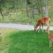mama and baby from the kitchen window by Naturegrl64 (Diana)