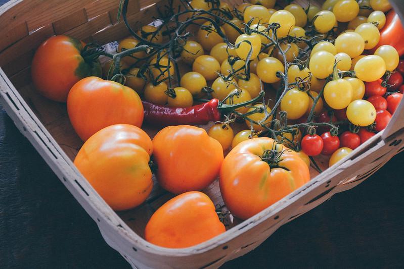oxheart orange, lemon drop + mexico midget tomatoes