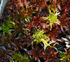 Big Bog moss. by U.S. Fish and Wildlife Service - Midwest Region