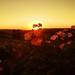 Bristol Sunset by FAÇ 51