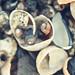 shells, Bumpkin Island, Hingham Harbor by K Hawkins Photography