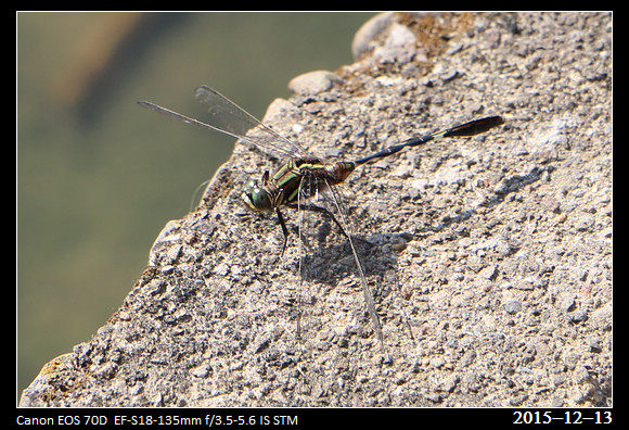 20151213_Dragonfly_2