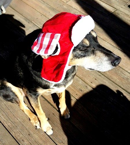 Dog in a Trapper Hat - Lapdog Creations