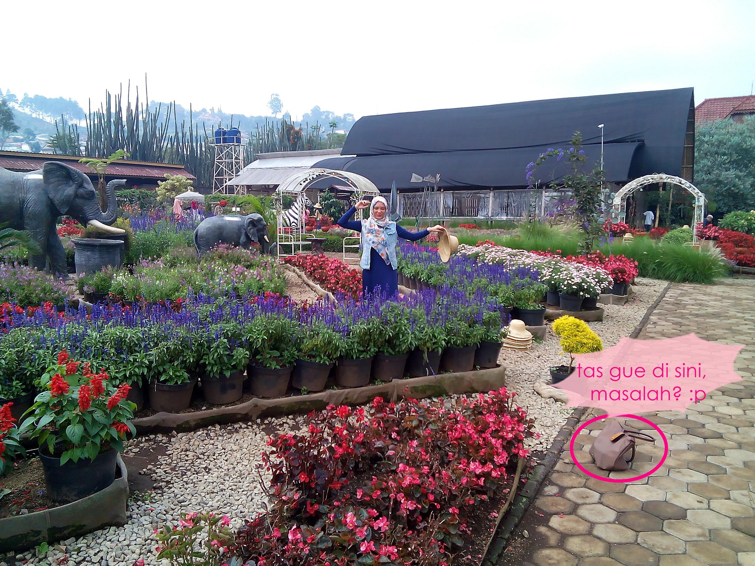 kebun-bunga-begonia-12