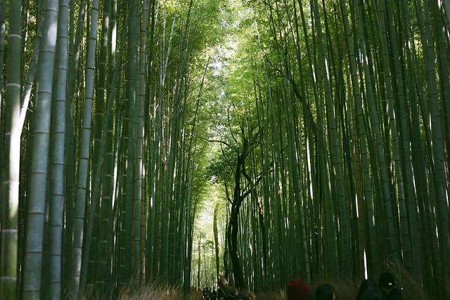 岚山风景区竹林小径