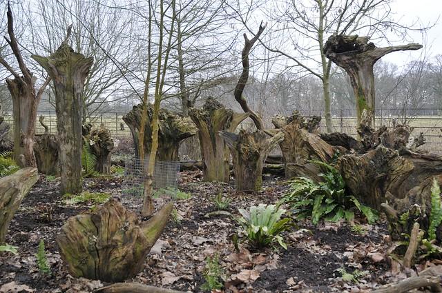 Wimpole Hall stumpery #2