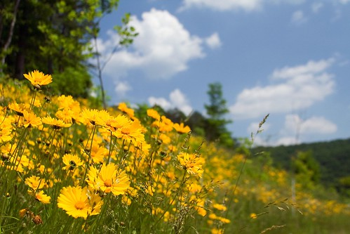 flower tag3 taggedout tag2 tag1 cumberlandgap nationalhistoricalpark payitforward gtaggroup cumberlandgapnationalhistoricalpark