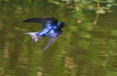 hummingbird(0.0), jay(0.0), animal(1.0), wing(1.0), nature(1.0), green(1.0), fauna(1.0), bluebird(1.0), beak(1.0), bird(1.0), wildlife(1.0),