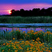 wetlands sunset by Steve took it
