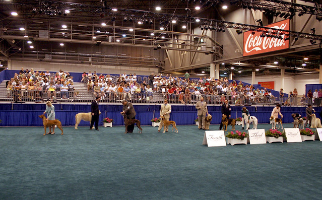 Header of American Kennel Club