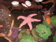 coral reef, animal, coral, organism, marine biology, invertebrate, marine invertebrates, reef, starfish, sea anemone,