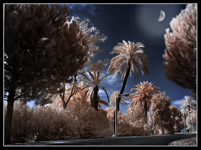 Moon Ligth