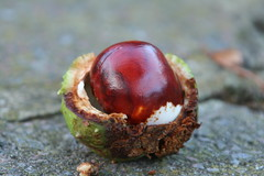 chestnut, nuts & seeds, red, macro photography, fruit, food, close-up,