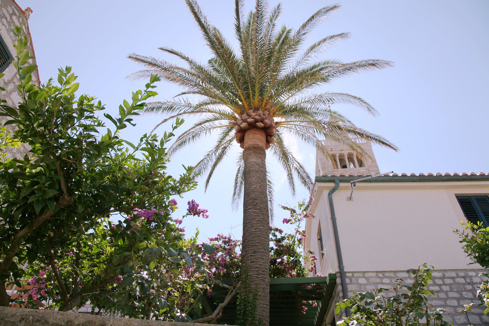 rab island croatia church palm tree summer 2015 vacation rabb
