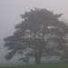Foggy Day in Whitnall Park by Milwaukee County Parks