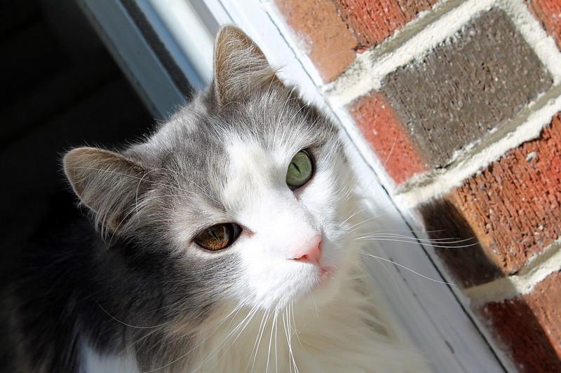Fotos de animales de todo tipo incluyendo mascotas que más te gustan - Página 2 21930705699_87d016398b_c