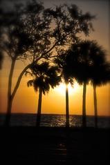 St Petersburg FL 11-16-16 032