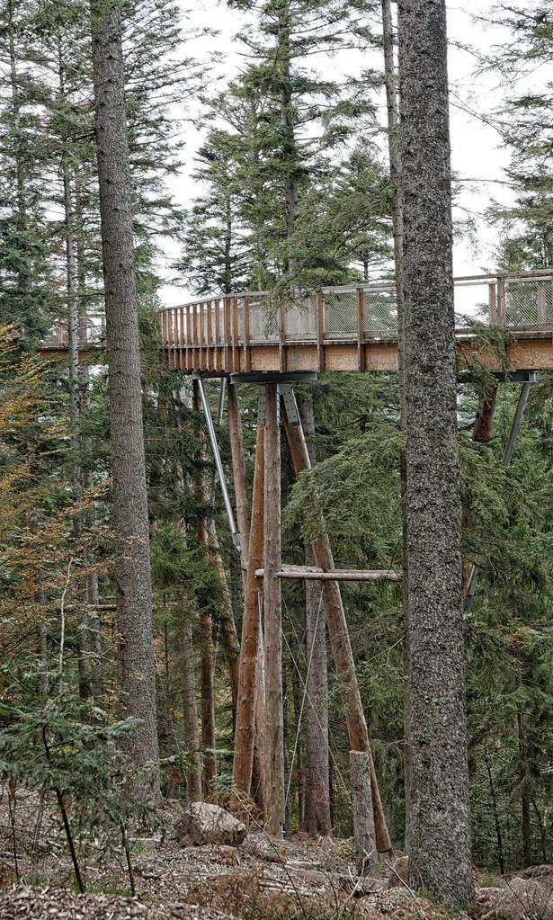treetop walk Schwarzwald