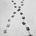 Tracks, Oregon by austin granger