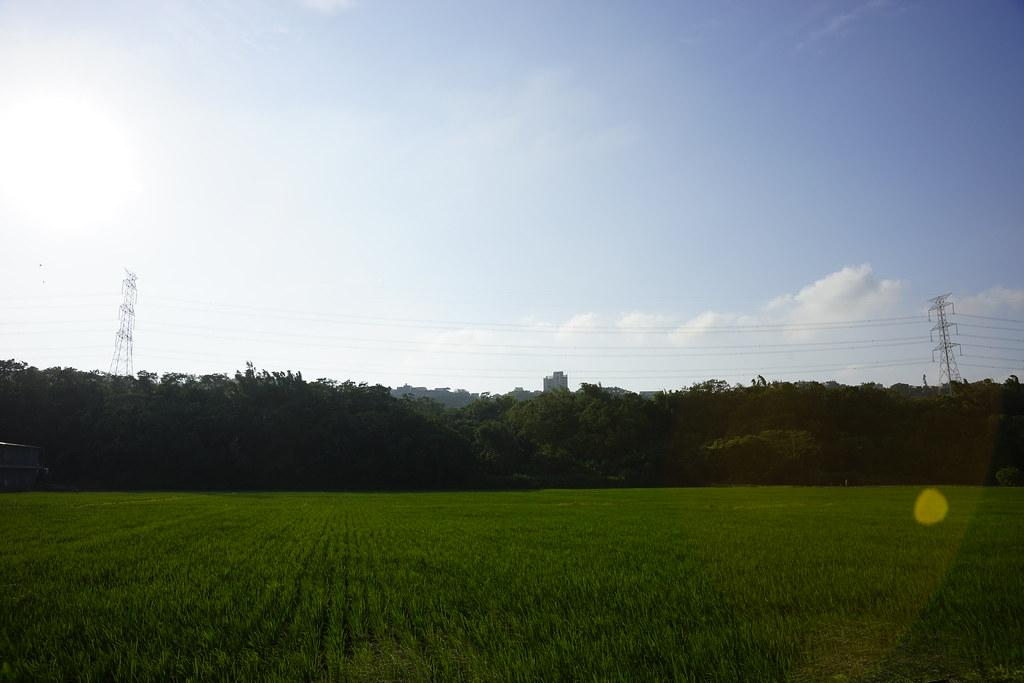 【桃園】大溪韭菜花田