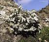 Lichen. by spuddie7