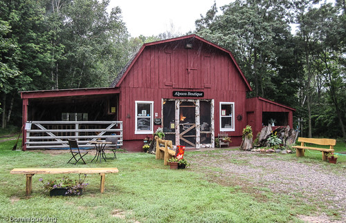 Crystal Lake Alpaca Farm Boutique, Benzonia, Michigan