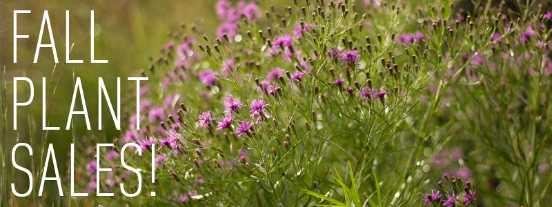 Rhone Street Gardens Fall Plant Sales