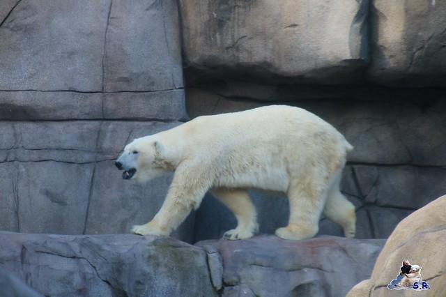 Tierpark Hagenbeck 27.09.2015 083