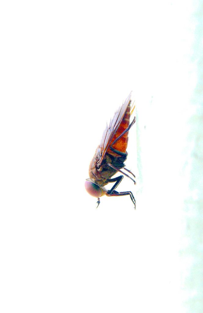 15_Fly_2