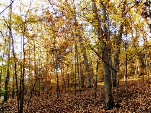 park autumn lake nature leaves state kentucky kincaid