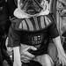 Darth Pug by BautistaNY