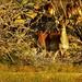 Gazelle by benyoussefsalah694