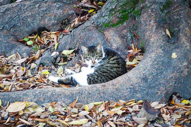 Today's Cat@2015-11-16